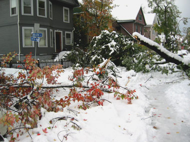 trees block the street from a surprise October storm in Buffalo, NY